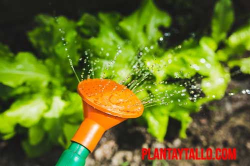a que hora es mejor regar las plantas