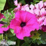 ¿Qué y cuáles son las plantas anuales? Nombre y ejemplos