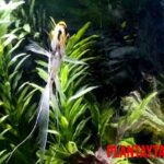 Plantas naturales o artificiales para acuario, ¿Qué es mejor? Ventajas y desventajas