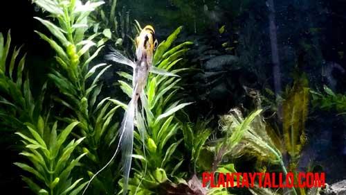 plantas naturales o artificiales para acuario