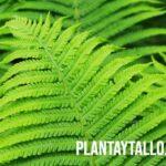 ¿Qué son las plantas sin semillas, como se reproducen? Y algunos ejemplos