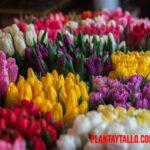 Porque las flores son de colores, ¿tiene alguna función?