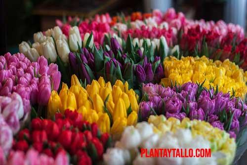 porque las flores son de colores