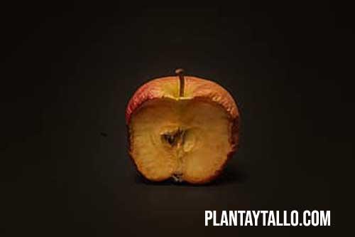 porque se oxida la manzana