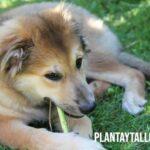 Como alejar perros del jardín de mi casa y evitar que defequen o escarben