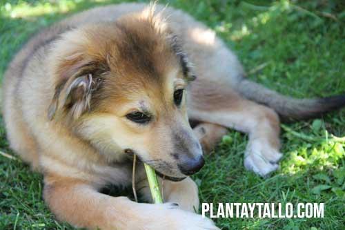 como alejar perros de mi jardin
