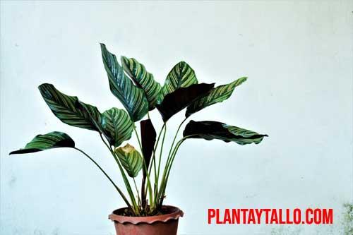 mis plantas no crecen indoor