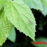 5 ejemplos de plantas que repelen mosquitos de forma natural