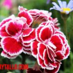 ¿Cuál es la diferencia entre plantas vivaces y perennes? Ejemplos y nombre