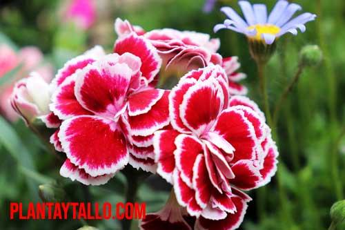 plantas vivaces y perennes
