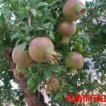 ¿Qué tipo de abono necesitan los árboles frutales y cuándo?