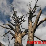 Remedios caseros para secar un árbol de forma natural y sin contaminar