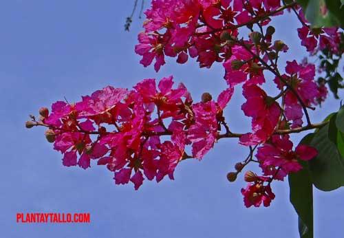 árboles de flores moradas