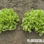 Que es el fotoperiodo en plantas y como aprovecharlo a nuestro favor