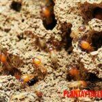 Insectos que comen madera y ejemplos que dañan tus construcciones