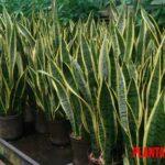 5 ejemplos de plantas que necesitan poca luz e ideales para interior