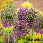 ¿Por qué hay plantas venenosas y cómo se polinizan?