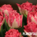 ¿Por qué hay flores que se cierran y se abren al caer la noche?