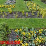 ¿Por qué mi jardín no florece? Lista de razones a revisar