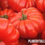 6 tipos de tomates muy utilizados en la cocina