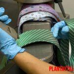 Como sacar savia de árbol de la ropa con 5 métodos sencillos