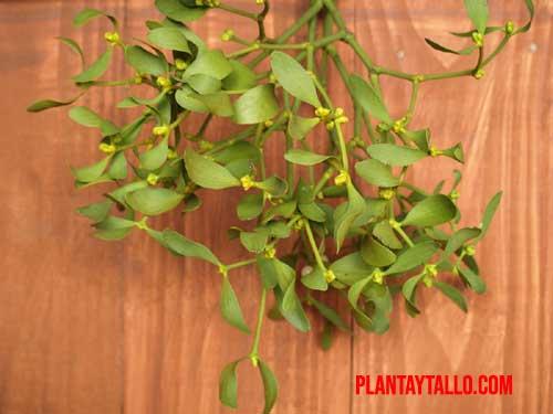 mitos sobre las plantas