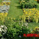 Aprende porque un jardín es un ecosistema humanizado