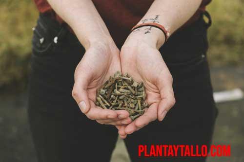beneficios jardineria salud mental