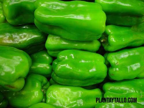 como conservar pimientos verdes