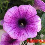 5 plantas de exterior con flor todo el año, para tener siempre lindo tu jardín