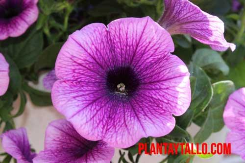 plantas de exterior con flor todo el año