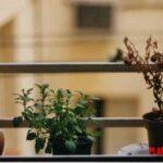 ¿Es bueno mover las plantas de sitio? De ubicación, de maceta o sembrada