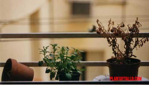 ¿es bueno mover las plantas de sitio?