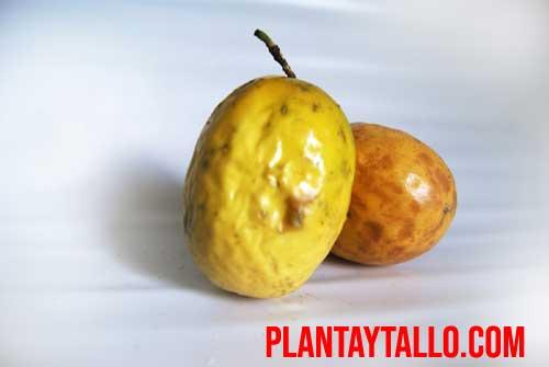 Las 5 frutas exóticas que tienes que probar antes de morir