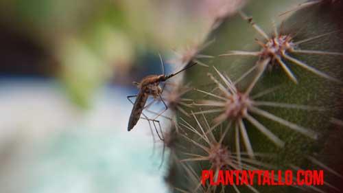 como eliminar los mosquitos de las plantas