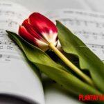 ¿Es cierto que las plantas crecen mas rápido con música? Explicación