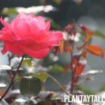 Nombres y ejemplos de flores con espinas (Fotos incluídas)
