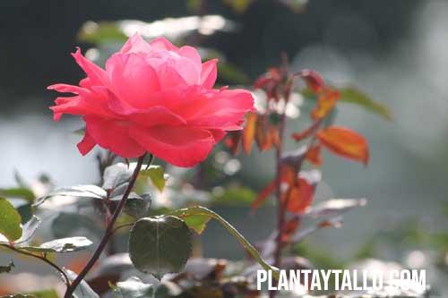 flores con espinas