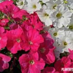 ¿Qué son las plantas ornamentales y para que sirven? Los diferentes tipos y ejemplos