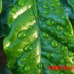 ¿Qué son los estomas en las plantas, donde se encuentra y de que se encargan?