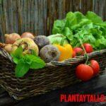 Datos curiosos de las frutas y verduras que te sorprenderán