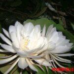 Las 5 flores más caras del mundo (con fotografía)