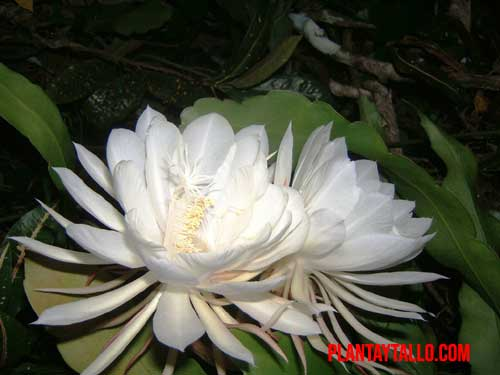 flores mas caras