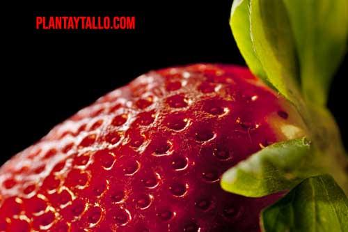 fresa semillas exterior