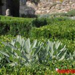 5 curiosidades de las plantas medicinales muy interesantes
