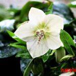 Razones para amar las plantas, ¿por qué tenerles cariño?