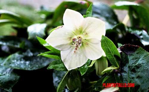 razones para amar las plantas