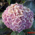 5 plantas que florecen en invierno para tener flores en fin de año