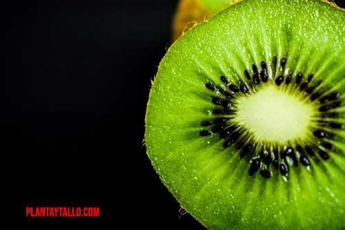 porque hay frutas que tienen sabor acido