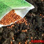 Conoce porque las semillas no necesitan luz para germinar